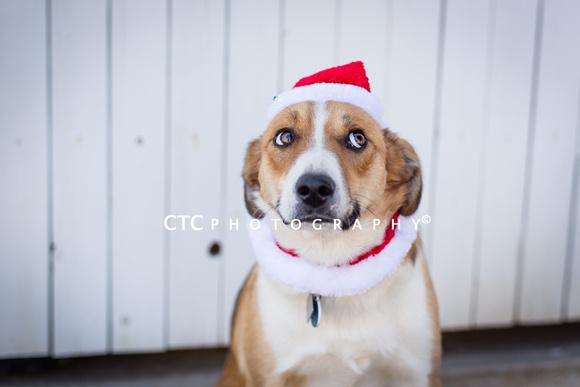 Dog Christmas 2